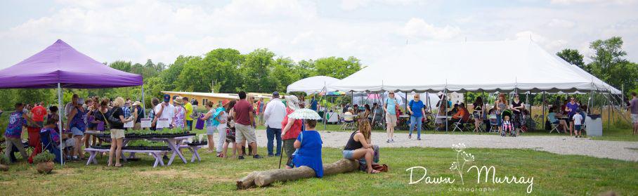 11th Annual Lavender Festival June 15 & 16 10am to 6pm